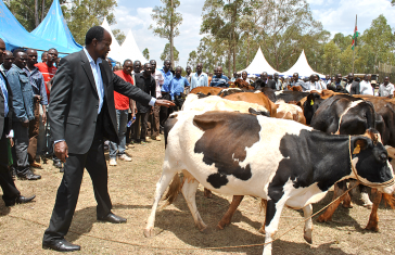 Promoting Dairy Farming